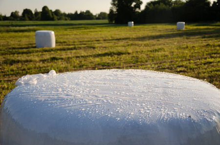 polythene: polythene wrapped grass bales haystacks fodder for animal on harvested meadow.