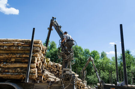 Man loading felled tree logs with timber crane to heavy truck trailer for transportation.  Stock Photo