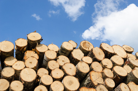 large pile of cut pine logs on blue sky background