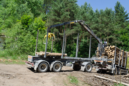 forestry industry: Worker man load felled tree logs with timber crane to heavy truck trailer for transportation. Forestry industry.  Editorial