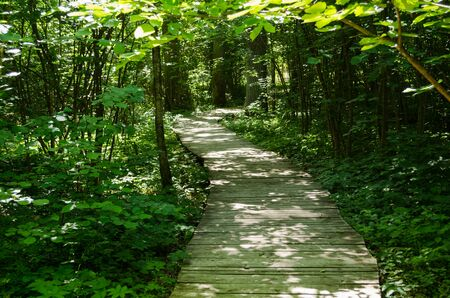wooden path through the green park area for cognitive excursion
