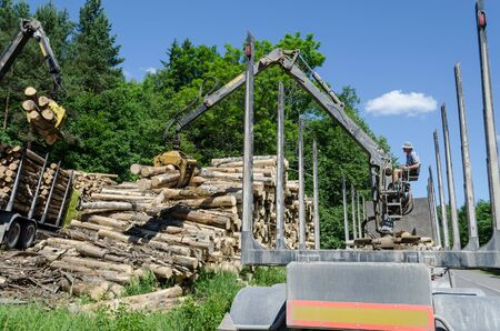 Worker man load felled tree logs with timber crane to heavy truck trailer for transportation. Forestry industry.  Stock Photo
