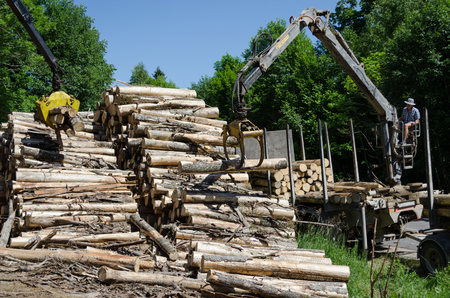 MOLETAI, LITHUANIA - CIRCA JUNE 2013 - Man loading felled tree logs with timber crane to heavy truck trailer for transportation circa June 2013 in Moletai.