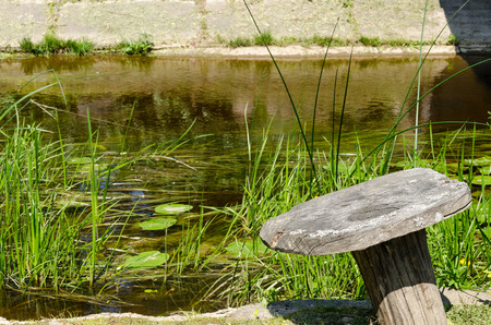clear stream flowing near the shore grow a lot of long green grass on a water lily leaf  Stock Photo