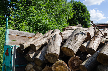 pile of cut logs in trailer, forest seasonal work summer time  Stock Photo