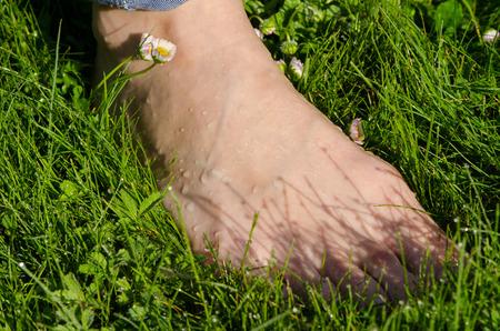 Bare foot woman leg in early morning dewy wet meadow lawn grass.  Stock Photo