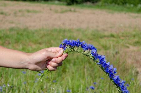 Closeup of woman hands make cornflower crown wreath.