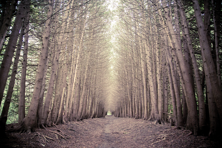 dark elf: dark forest grove with trees growing in the summer Stock Photo