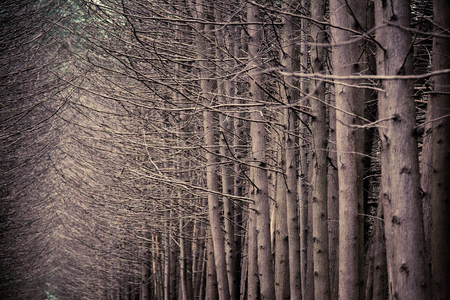 void: dark forest grove with trees growing in the summer Stock Photo