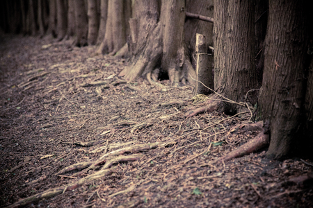 magick: dark forest grove with trees growing in the summer Stock Photo
