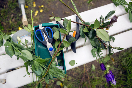 cutoff: accessories scissors, shears lie on the bench with a cut-off branches flowers Stock Photo