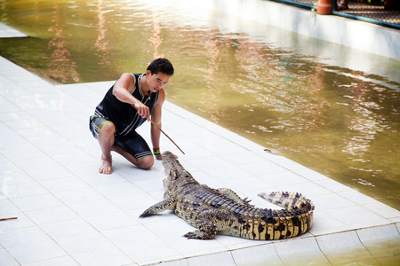 lazarus: KOH SAMUI, THAILAND - December 17: Crocodile wrestler performing a show, The Day Of St. Lazarus in December 17, 2012