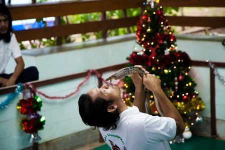 handler: Koh Samui, Thailand - December 14 : guy is a snake handler in the arena of kissing a Cobra for the entertainment of tourists on the Day of St. Lucia, December 14, 2012. Editorial
