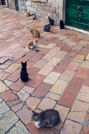cats sit on the street in the city of Kotor on the street on a square paving stone tiles Stok Fotoğraf