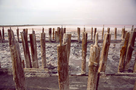 old dried up logs stand on a pink salt lake in the water in summer