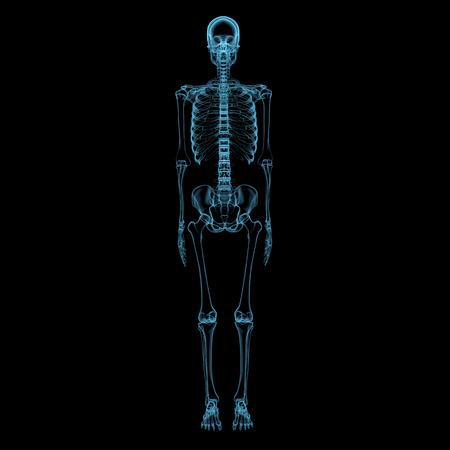 Human skeleton  3D xray blue transparent isolated on black background