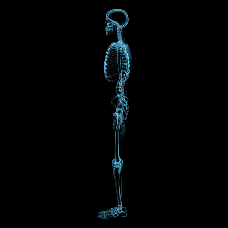 Human skeleton  3D xray blue transparent isolated on black background  photo
