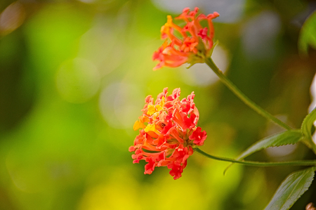 cultivable: Small red flower photographed close up with beautiful details