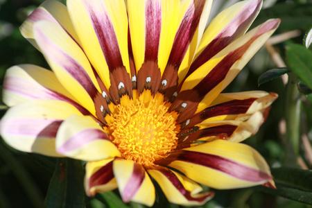spotty: white spotty flower