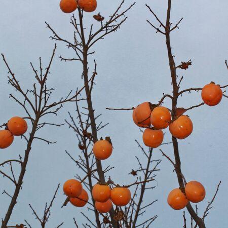 date tree: date tree