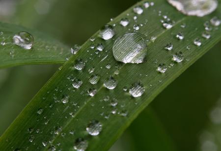 kropla deszczu: raindrop Zdjęcie Seryjne