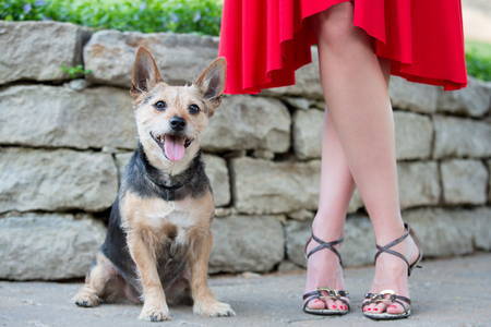 dressy: A close up low shot of a happy male terrier mix dog outside with his dressy female owner