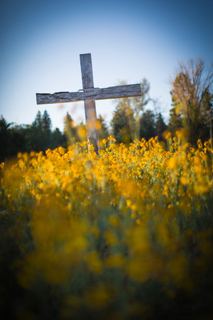 blanketed: Vertical color shot of a large wooden cross in an old New Mexican cemetery blanketed in yellow wild flowers