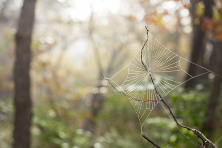 focus shot: Selective focus shot of a large diamond shaped spider web Stock Photo