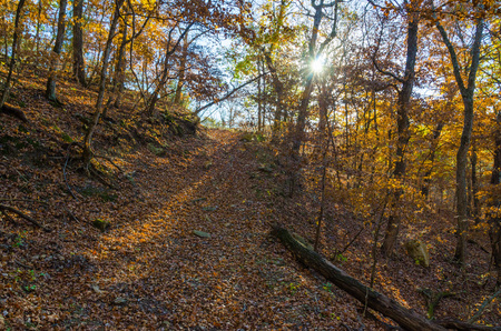 walking trail: A wide landscape shot of a walking trail in autumn