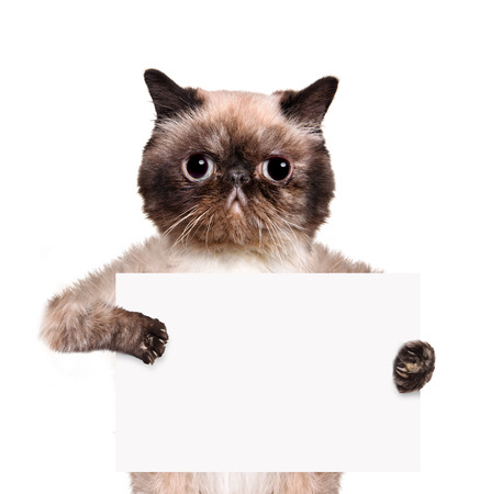 placeholder: Placeholder banner cat. Isolated on white.
