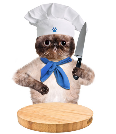 Cat chef. Isolated on white photo