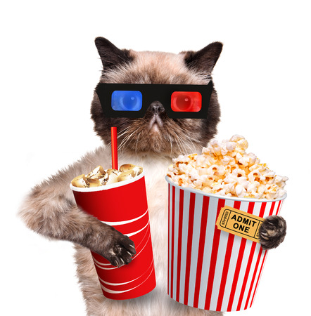 funny movies: Cat watching a movie. Isolated on white. Stock Photo