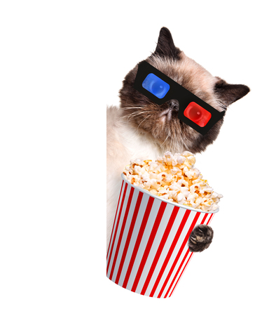 viewer: Cat watching a movie. For white banner. Stock Photo