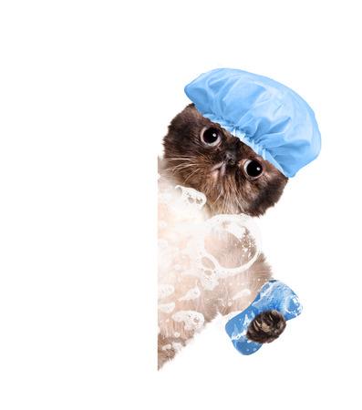 Cat Wäschen. Für weiße Fahne. Standard-Bild - 40134969