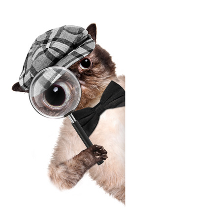 Cat with magnifying glass and searching. For white banner.