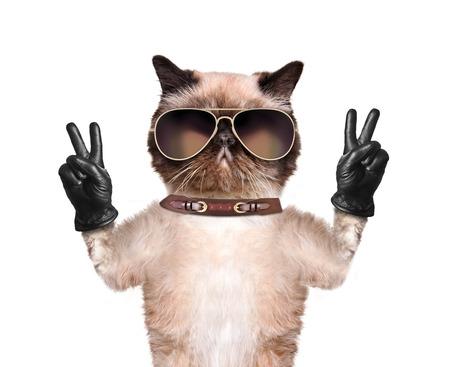 simbolo de la paz: Gato con los dedos de paz en cuero negro. Aislado en blanco.