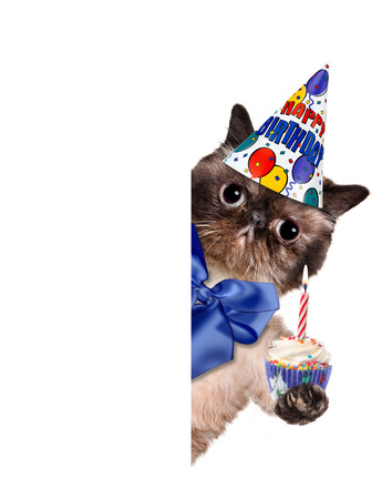 hat new year happy new year festive: Birthday cat. For white banner.