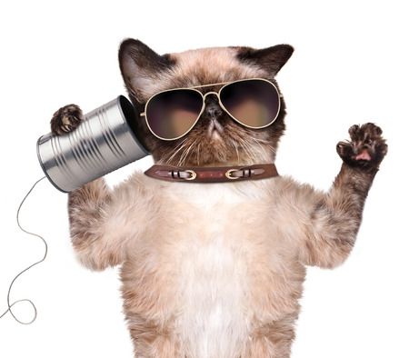 animal idiot: Cat on the phone with a can. Isolated on white.
