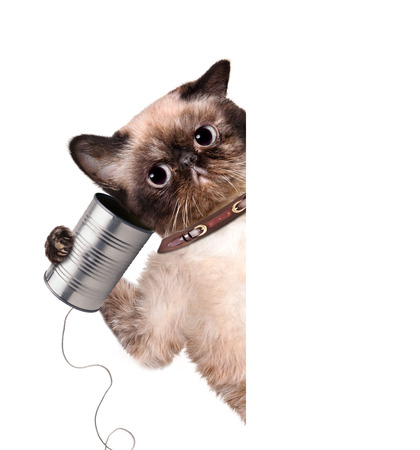 animal idiot: Cat on the phone with a can. For white banner.