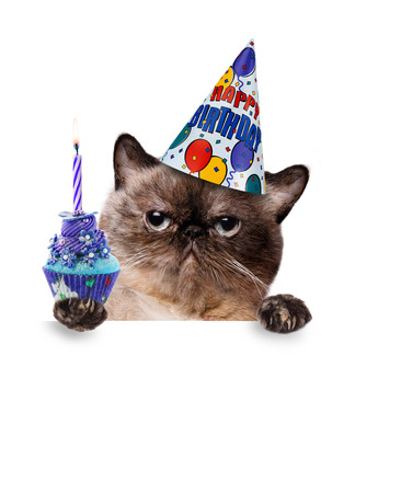 funny cats: Birthday cat. For white banner.