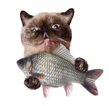 purr: Cat with fish. Isolated on white.