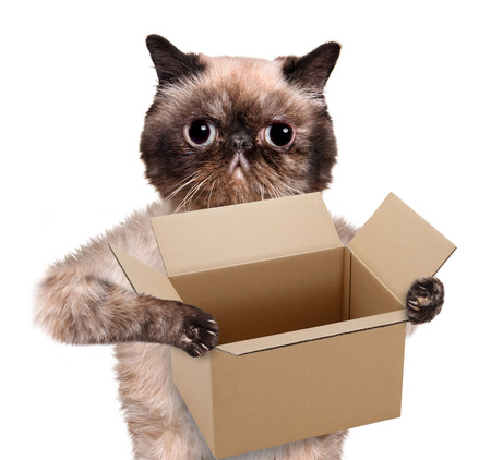moving box: Mail cat in with a big moving box. Isolated on white.