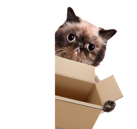 moving box: Mail cat in with a big moving box. For white banner.
