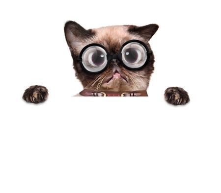 Verrückte dumme Katze mit lustigen Gläsern hinter leere Plakat Standard-Bild - 40135299