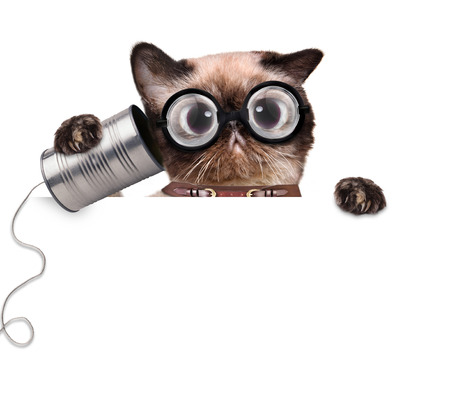 animal idiot: Silly ugly cat on the phone with a can. For white banner.