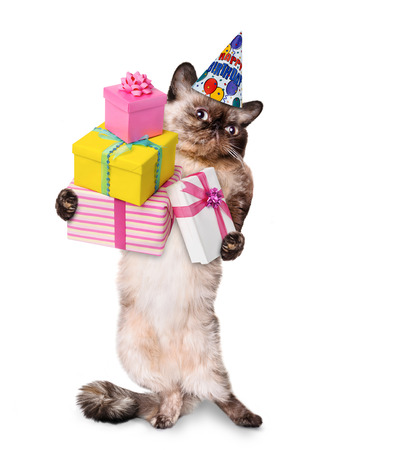 Birthday cat. Isolated on white. Фото со стока