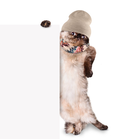 Fashionable cat behind a banner. Isolated on white.