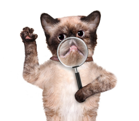 Cat with magnifying glass. Smile. Isolated on white. photo