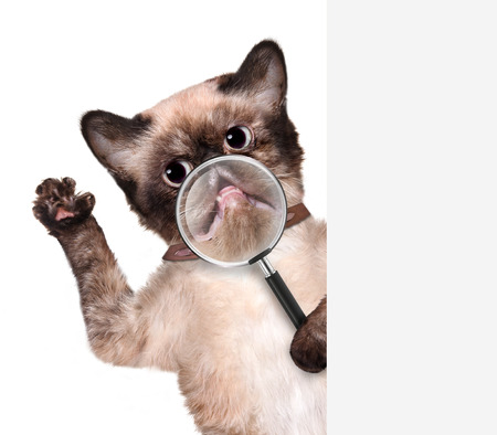 Cat with magnifying glass. Smile. For white banner. photo