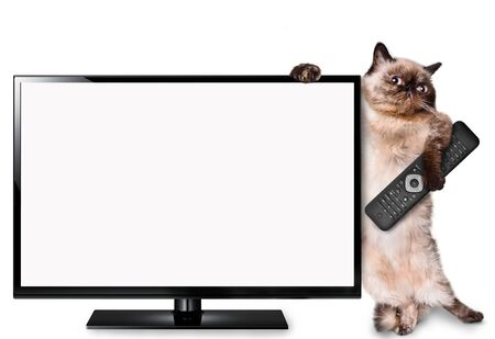 Cat watching TV. Isolated on white.